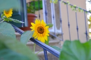 bajardo-giardino-fiori