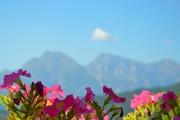 bajardo-panorama-fiori